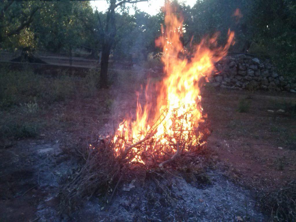 Olivenfeuer um 5.00 Uhr