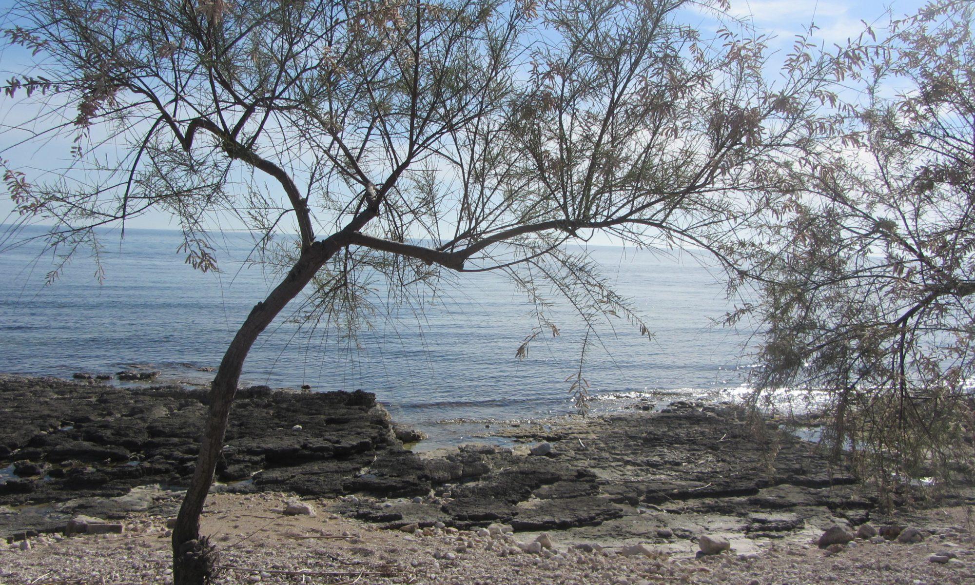 Ionisches Meer mit Baum