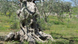 Kreative Langsamkeit im Olivenhain