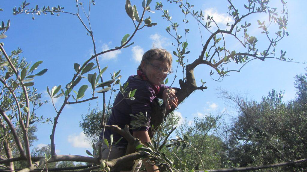 Angie Mautner in der Olivenernte 2017